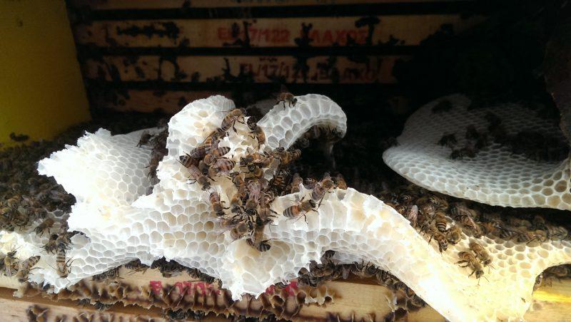griechische Bienen