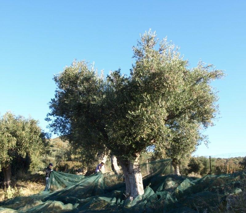 Netz um Baum legen