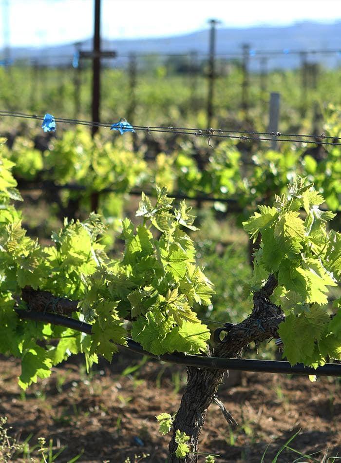 Mesimvria Winery
